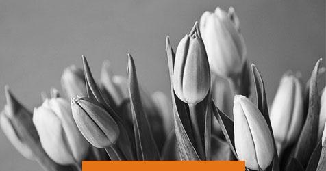 8 идей мультимедийных поздравлений к 8 марта